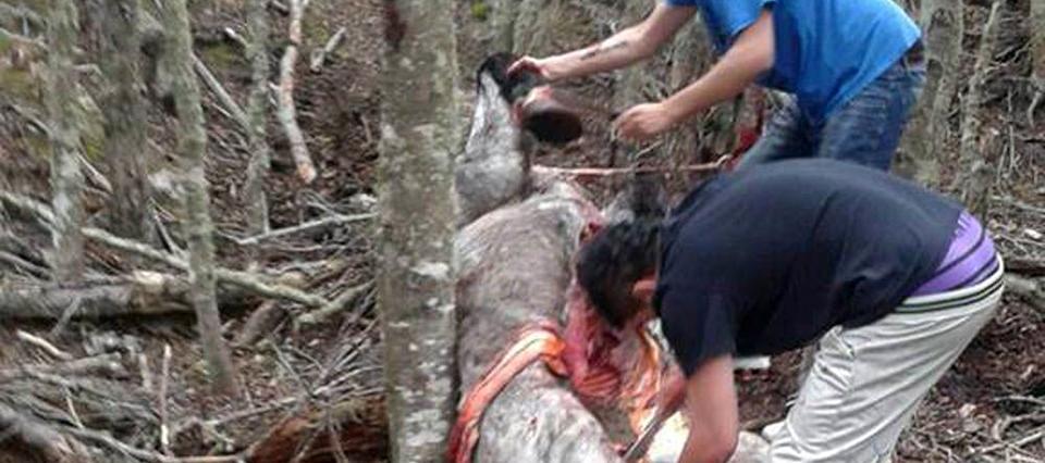 Una ONG representará a Shrek, el caballo asesinado a martillazos en Ushuaia