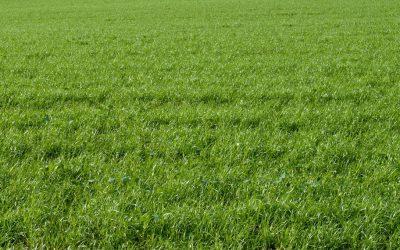 Fertilizantes de alta tecnología para tener un césped de calidad