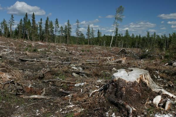 deforestacion1