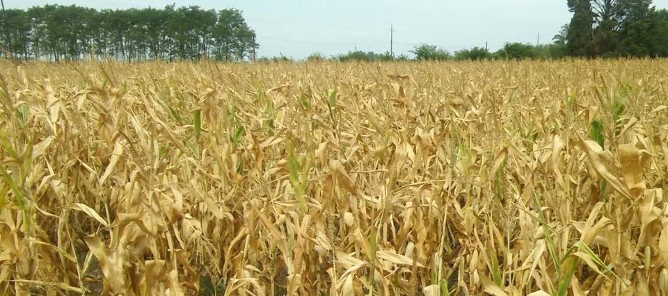 """Sequía: La Rural de 25 de Mayo reclamó """"cambios urgentes"""" en la Ley de Emergencia Agropecuaria"""