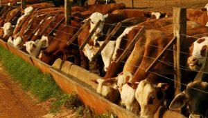 La exportaciones de carne tendrán un récord histórico durante 2019.