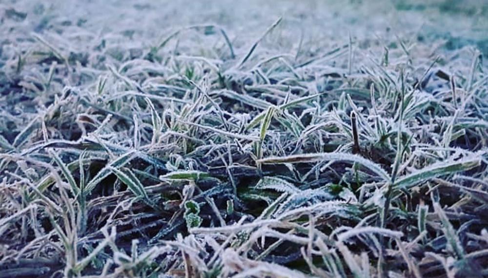Cuál fue el impacto en los cultivos de las primeras heladas del ...