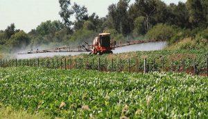 Vaina de soja para cosechar