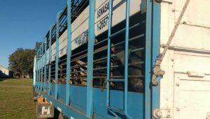 carne exportaciones infocampo