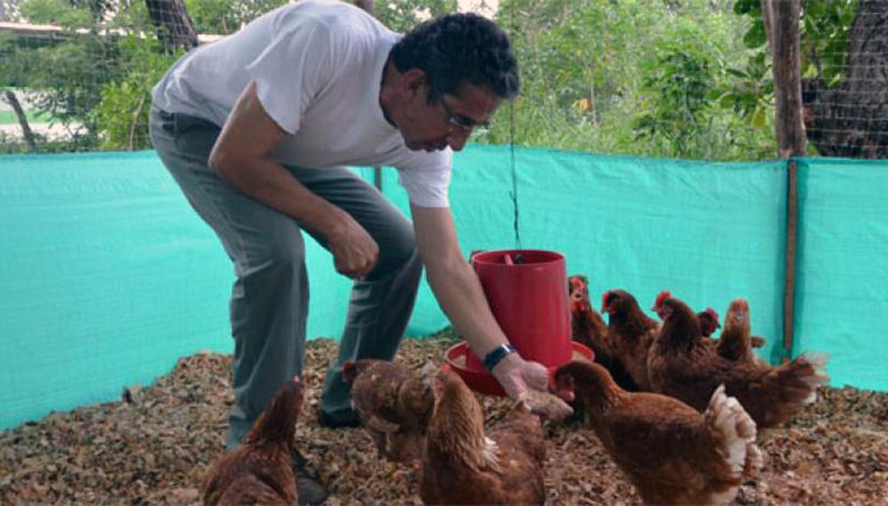 Curso familiar para la cría de gallinas ponedoras | Infocampo