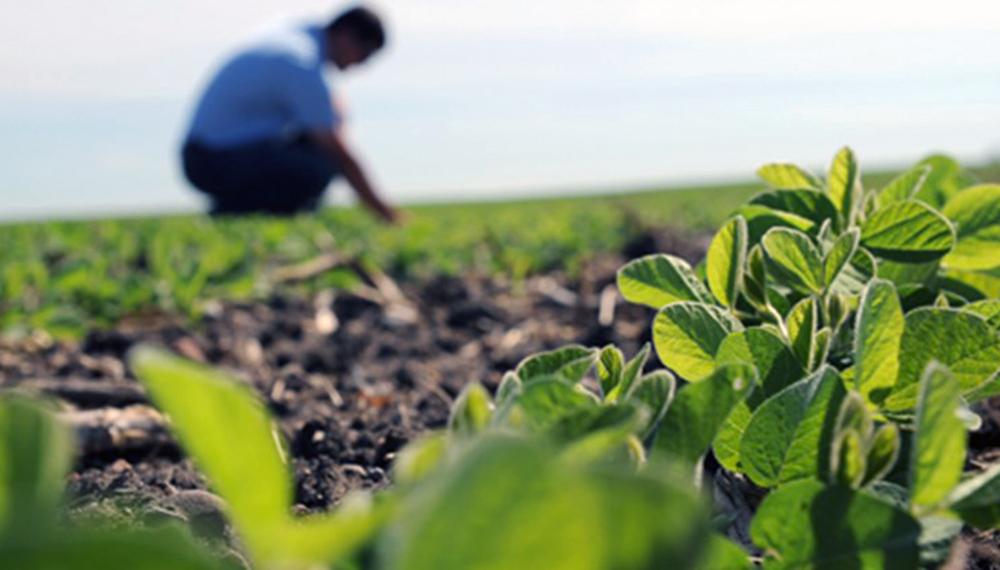 Resultado de imagen para mal año para los productores agropecuarios