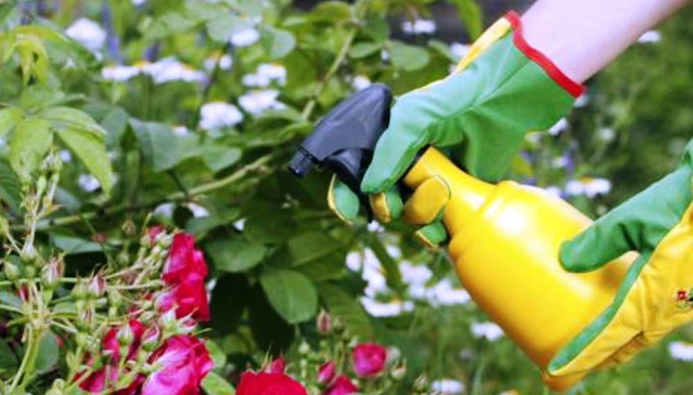 Los Siete Fertilizantes Orgánicos Caseros Más Eficientes Para Tu Huerta Infocampo
