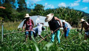 exportaciones agricultura