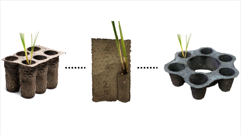Crean Un Cultivo Que Evita Deslizamientos De Tierra Y Reduce