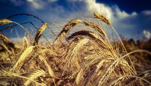 cbot precio de los granos chicago infocampo