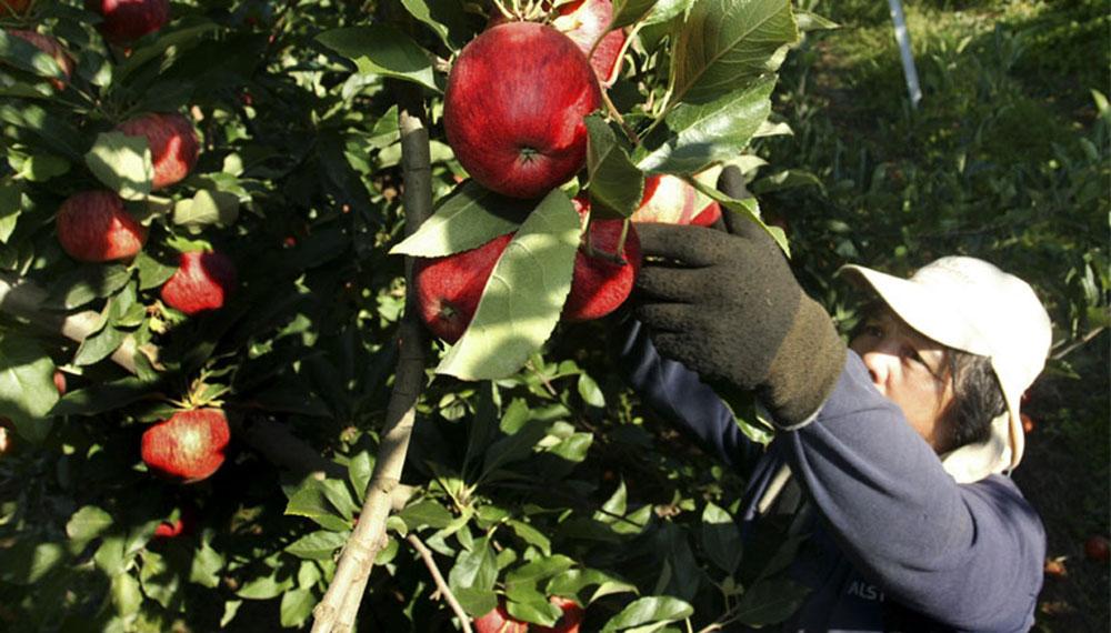 Tarjeta Alimentaria: Río Negro quiere incluir las frutas regionales.