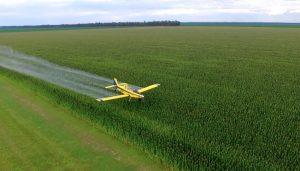 cultivos de arroz Corrientes Infocampo