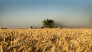 cosechadora girasol maquina agricola