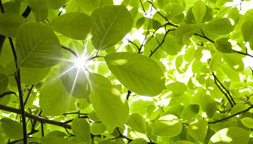 La Respiración De Las Plantas En Imágenes Infocampo