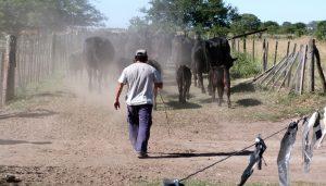 Campo Limpio - La Pampa - Gestión de envases vacios.