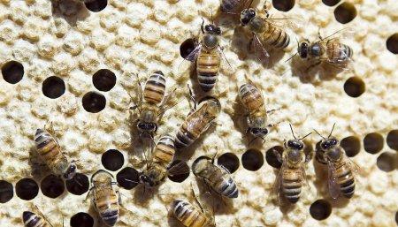 abejas muertas