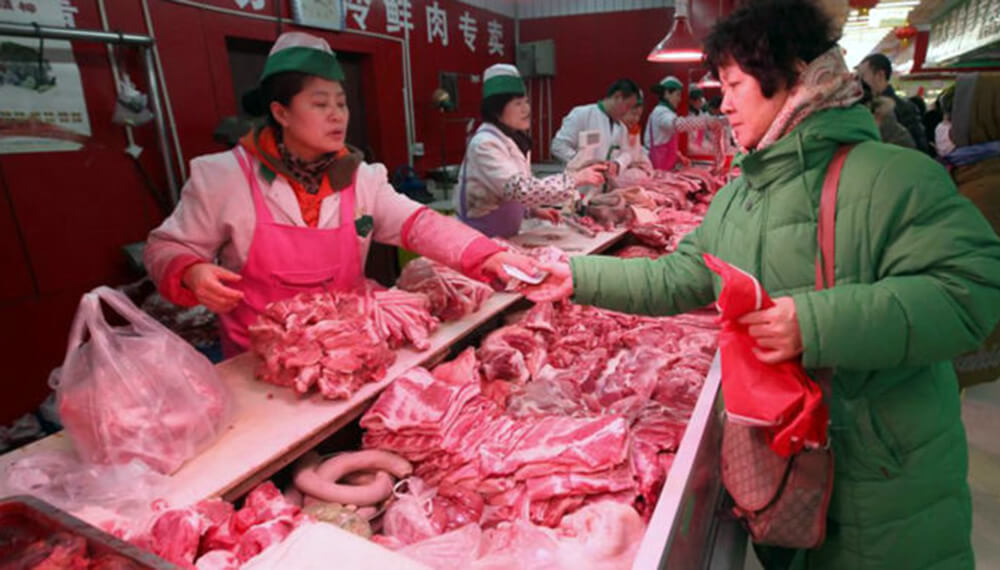 china cerdo infocampo