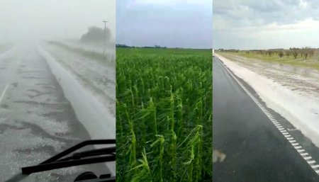 Las lluvias de los últimos días del año 2019 aseguraron el potencial de rinde de la soja y el maíz.