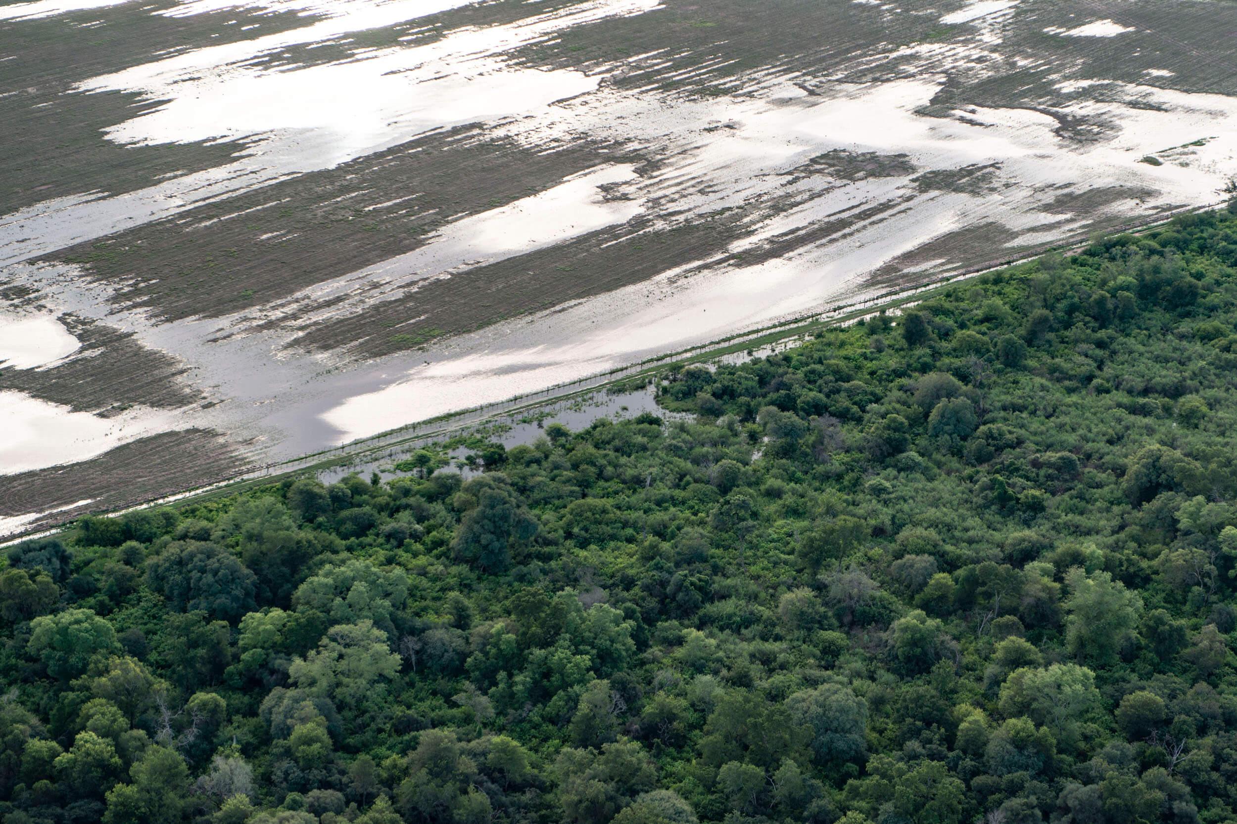 desmonte bosques inundaciones