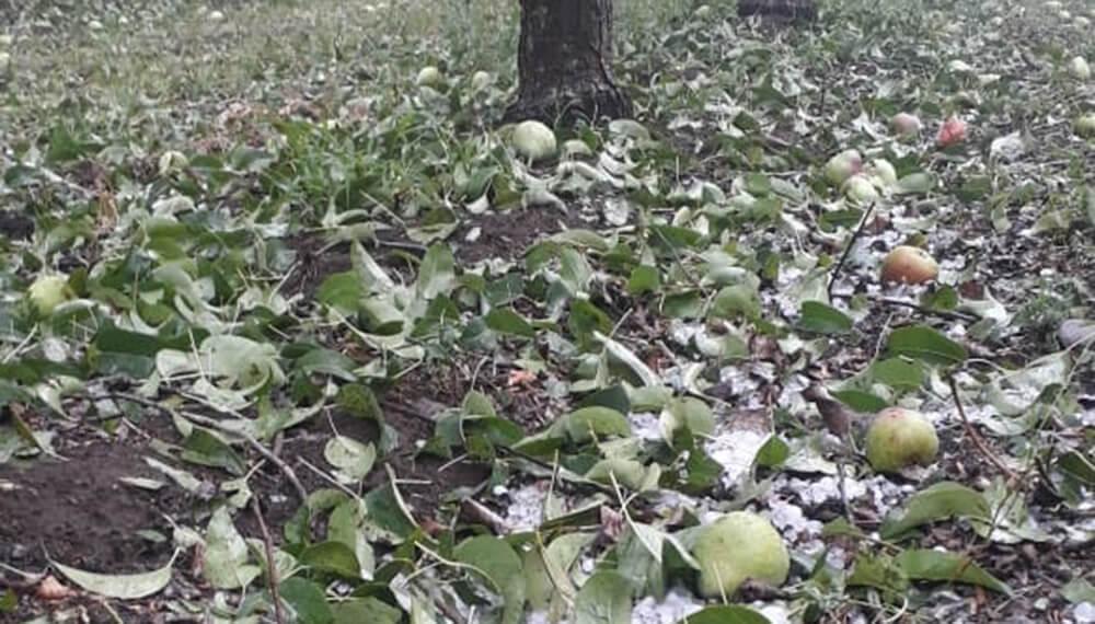 Clima: daños por granizo en Villa Regina, Río Negro