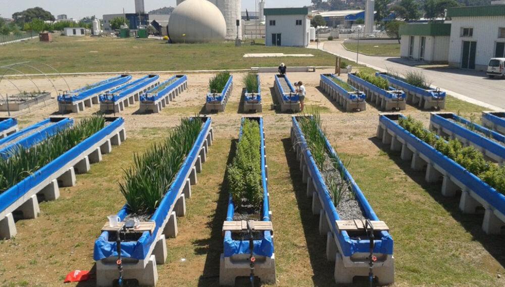 Canales para depurar el agua con mosto de cerveza y residuos forestales.