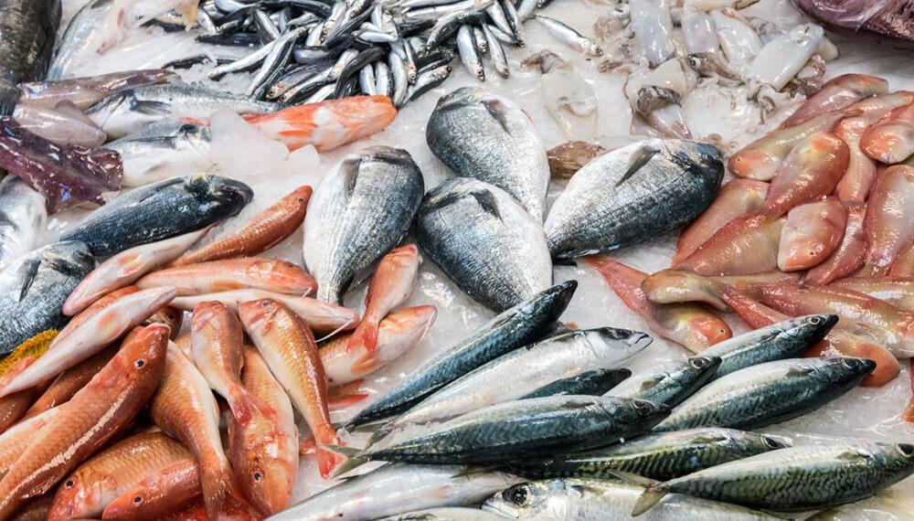 Varios tipos de pescados