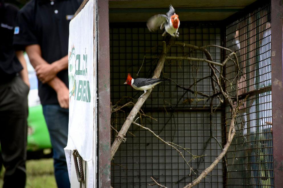 aves liberadas