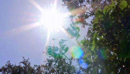Cielo - Trigo - Clima
