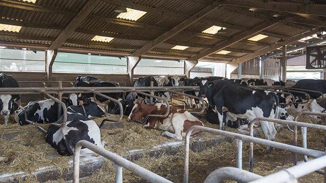 tambo vacas estados unidos