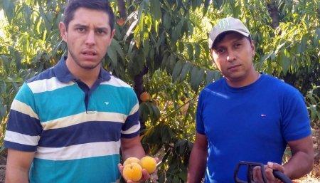 Fruto nectarina
