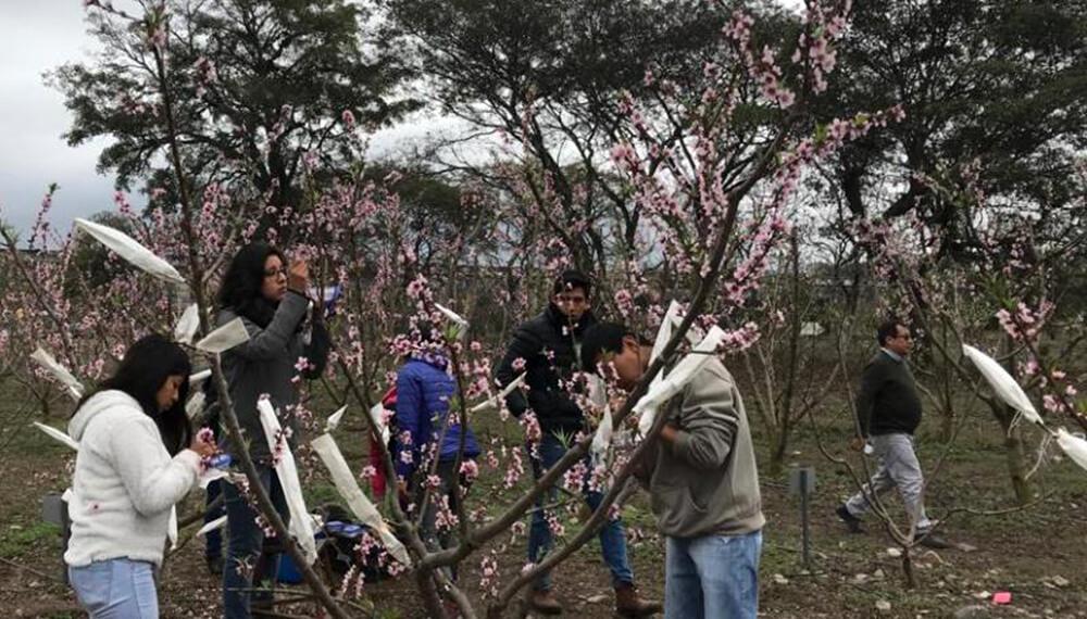 Investigadores trabajando con una planta de nectarina