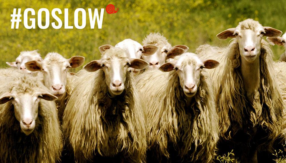 Campaña de slow food con cabras