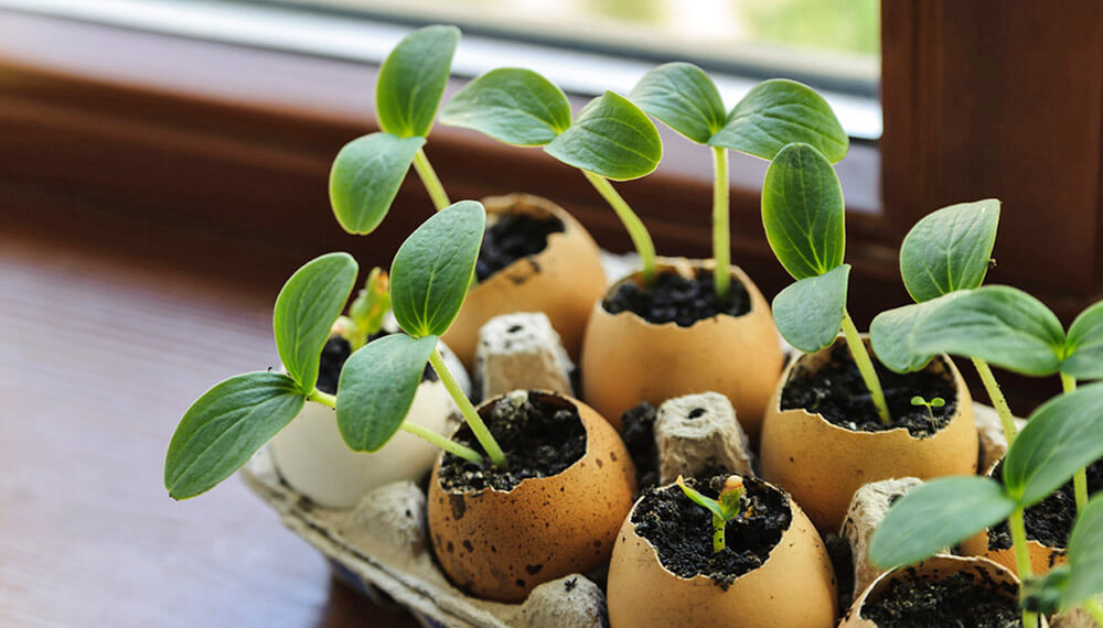 semillero cascara de huevo