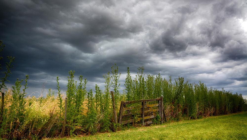 campo tormenta