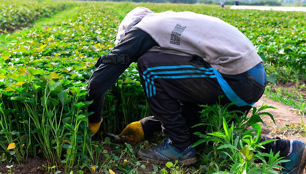 Trabajador rural