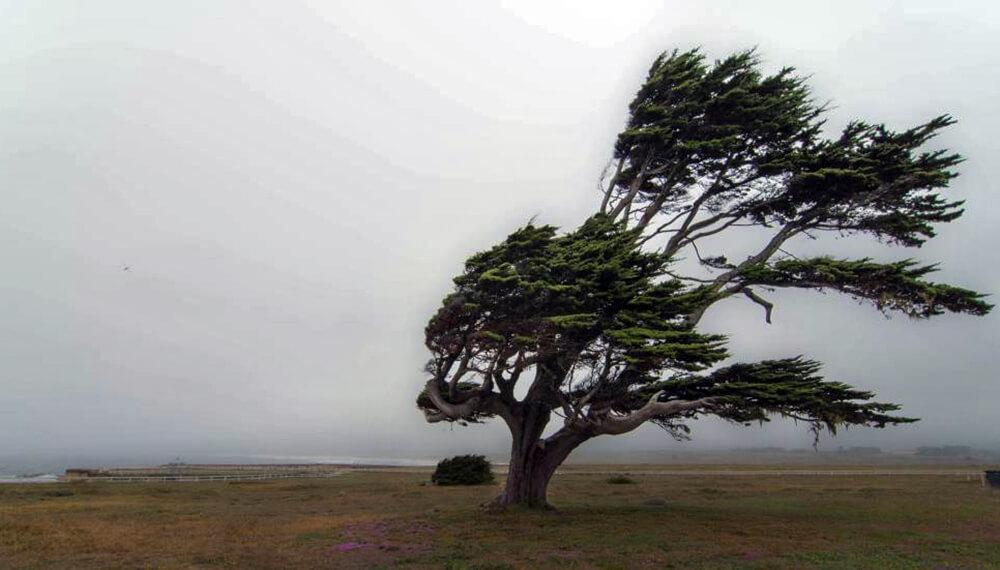 árbol viento