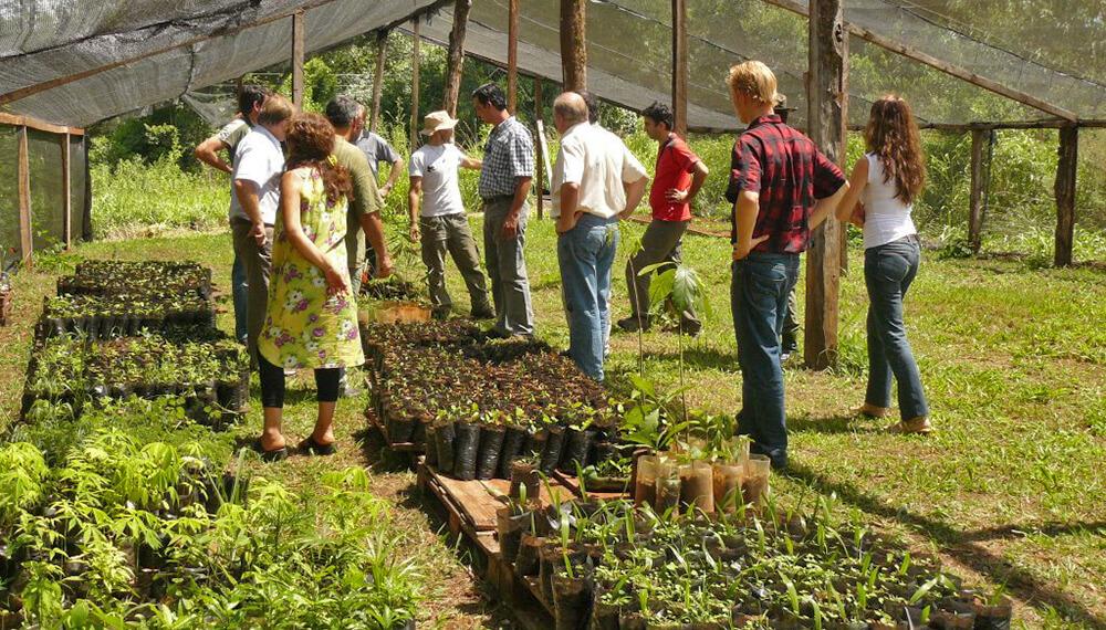 vivero plantines San Juan