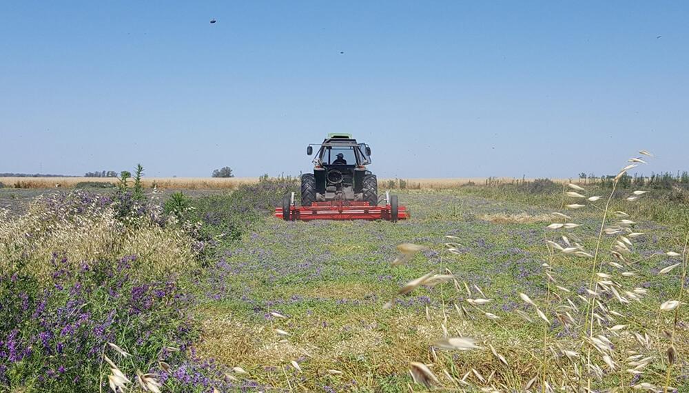 """Zona """"buffer"""" de cultivos periurbanos"""