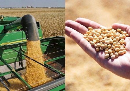 Ataques de gusano cogollero en maíz