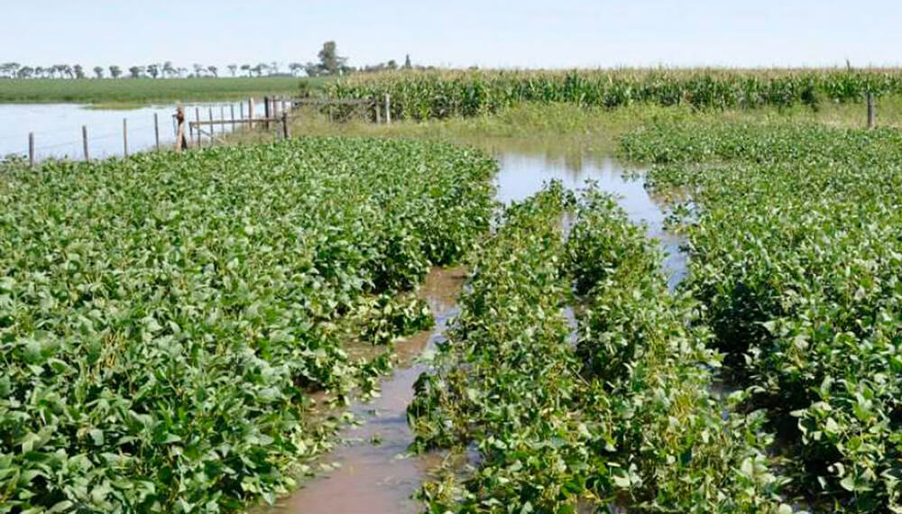 campo de soja inundado