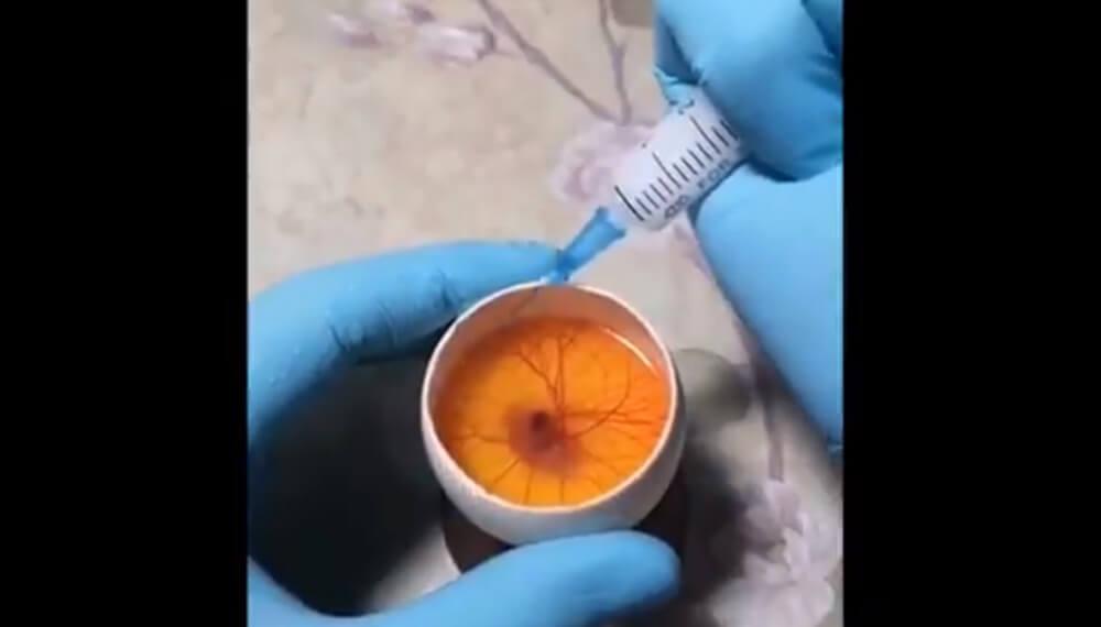 experimento con huevo de gallina