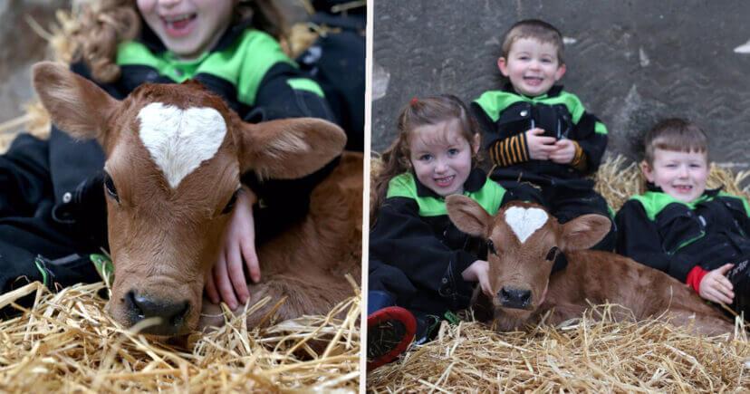 vaca con niños