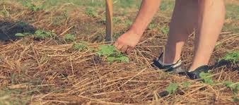 Acolchado de hierbas