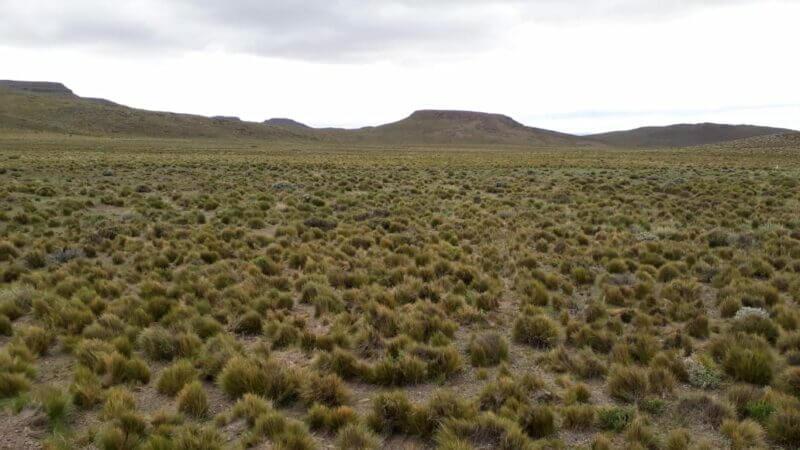 campo antes de la invasión de las tucuras sapo