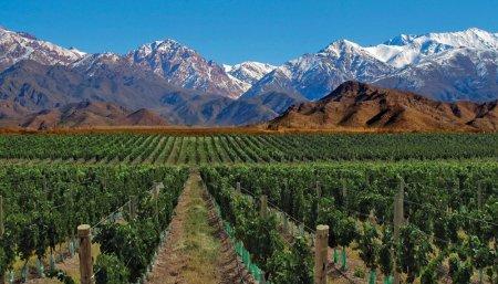 vino mendoza exportaciones