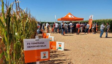 campo maiz