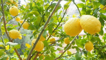 cultivo de frutillas en hidroponia
