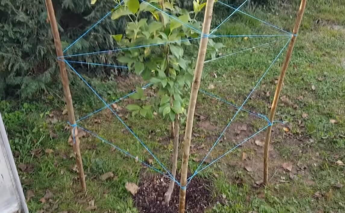 estructura de hilos y palos