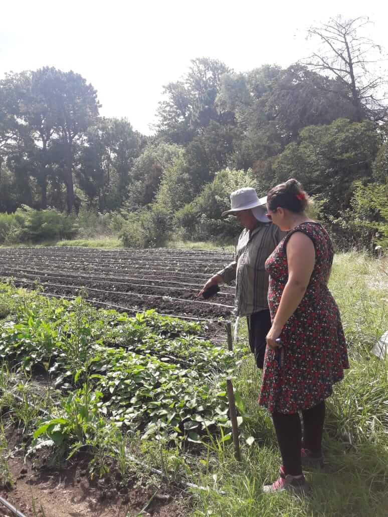 campo hortalizas