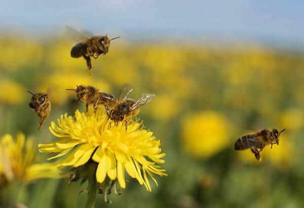 flores abejas